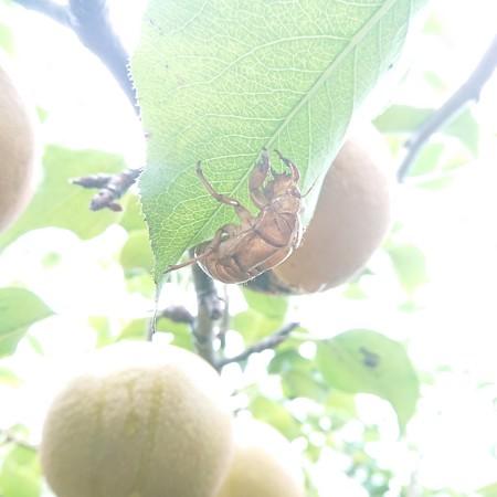 蝉も食べたかな