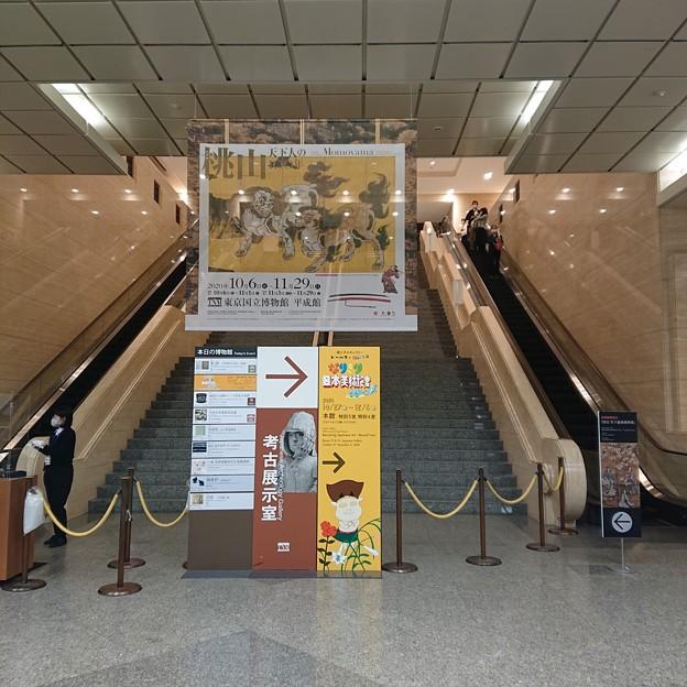 Photos: 桃山展