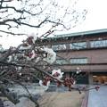 Photos: 茨城県立近代美術館と白梅