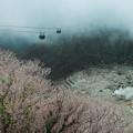 写真: 大涌谷の新緑