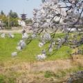 Photos: 薬師寺