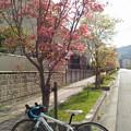 写真: 花水木