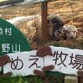 Photos: めいめい牧場