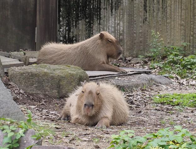 金沢動物園にて。