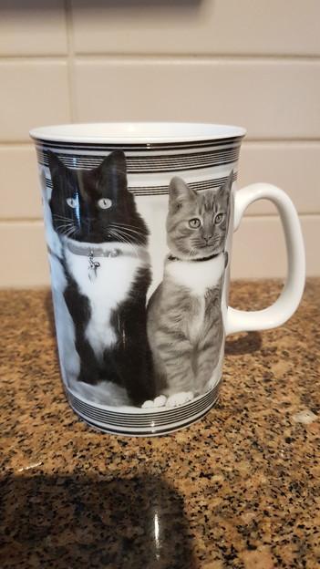 Photos: 猫マク?