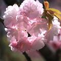 写真: 春撮り3