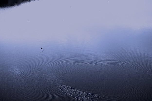 Photos: ダム湖-2