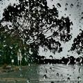 Photos: 今日は雨