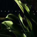 Photos: green #3