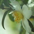 初冬咲き1