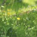 写真: 野の片隅に