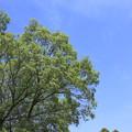 写真: 青く碧く