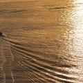 写真: 瀬戸の海へ