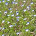 写真: 春のはらっぱ