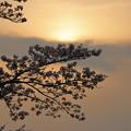 写真: 春の黄昏