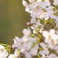 春はかけ足