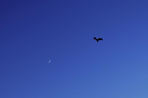 月とシルエット