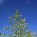 写真: 青空へ