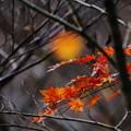 Photos: 秋深し