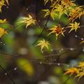 Photos: 時雨に濡れて