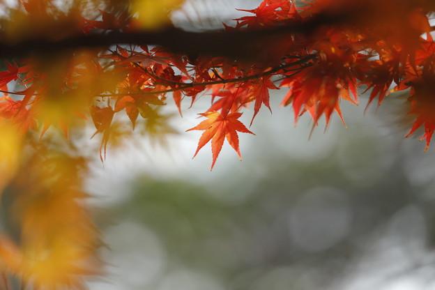 やわらかな秋
