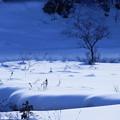 Photos: 雪の舞台
