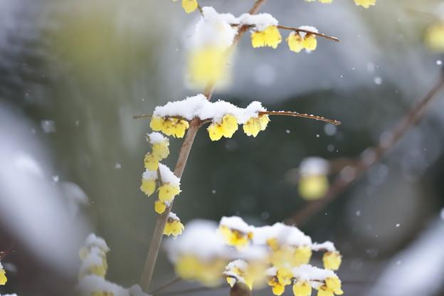 写真: ほんのり雪化粧