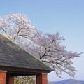 写真: 桜テラス