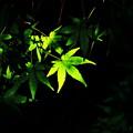 Photos: 緑の影