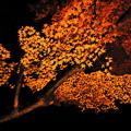 秋に燃えて