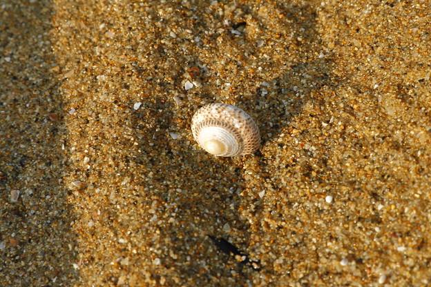 貝殻ひとつ