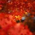 Photos: 紅の秋