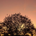 Photos: 木々をそめて