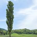 Photos: 高原の風