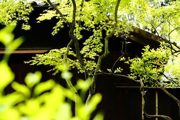 Photos: 初夏の静けさ