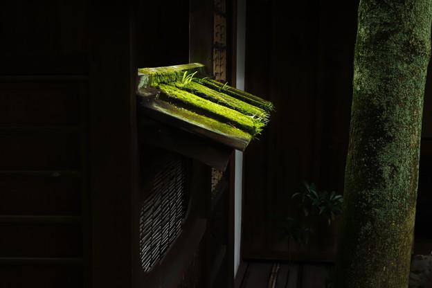 Photos: 緑深く