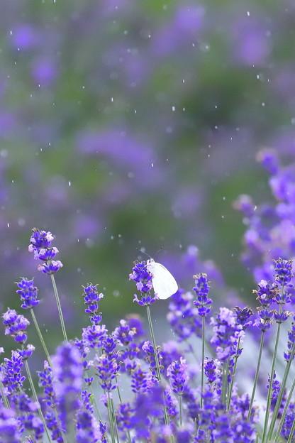Photos: 命咲かせて