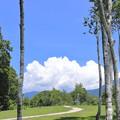 Photos: 木立と雲