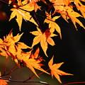 Photos: 秋深まり