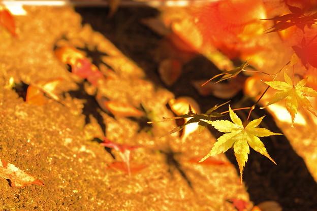 Photos: 秋の日