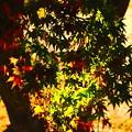 Photos: 秋の夕日に
