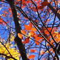 Photos: 輝きの秋
