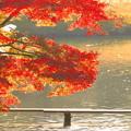 秋の光に包まれて