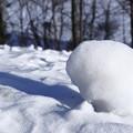 Photos: 白い季節