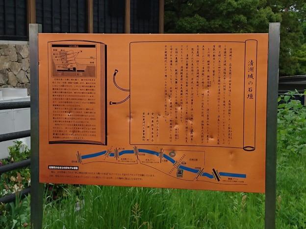 Photos: 清洲城の石垣