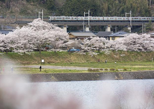 桂川と桜と中央本線
