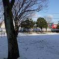 写真: 大雪の後