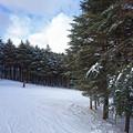 モミの木樹氷コース