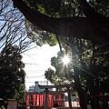 写真: 柔らかな朝日