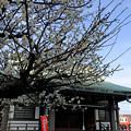 Photos: 春の足音